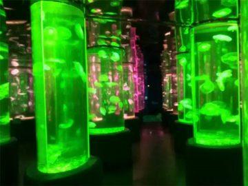 2018 dostawca akrylowej meduzy