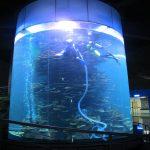 przezroczysty cylinder akrylowy duży zbiornik na ryby do akwariów lub parku oceanicznego