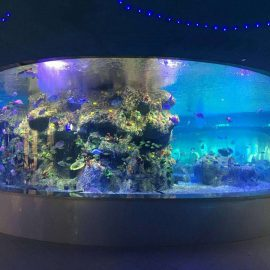 dostawa fabrycznie misek rybnych, okrągłych szklanych akwariów