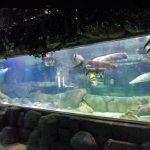 Indywidualny, luksusowy design podwodny Grube panele akrylowe Okno akwarium Szkło