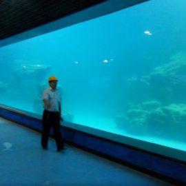 Panel akrylowy z odlewu ściennego UV do akwarium / oceanarium
