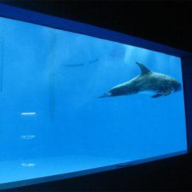 wysokiej jakości Duże akrylowe akwarium / basen okno podwodne grube okna