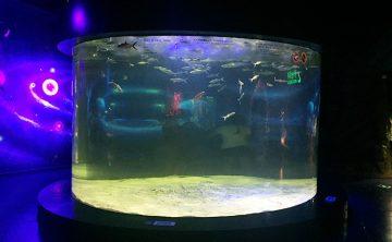 Akrylowy zbiornik rybny