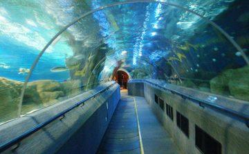 Tunel akrylowy