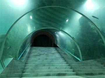 Cena projektu akwarium z tunelem akrylowym