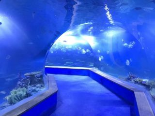Wyczyść pmma akrylowy Duży tunel z tworzywa sztucznego w akwarium