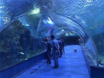 Niestandardowe akrylowe tunelowe akwarium z plexi