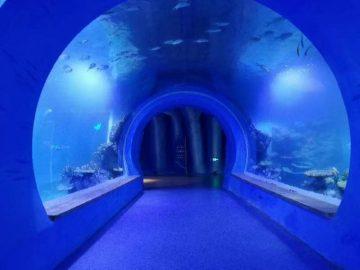 Wysoko przejrzyste duże akrylowe akwarium tunelowe o różnych kształtach