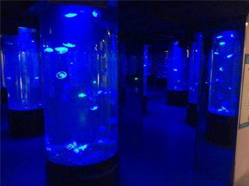 akrylowe meduzy szklane akwarium