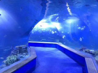 przezroczyste szkło akrylowe Tunelowe akwarium